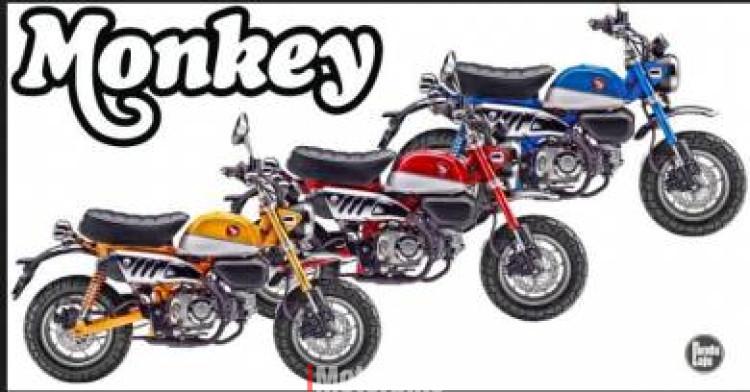 2019 2019 Honda Monkey 125 Msx 125 Monkey New Motorcycles